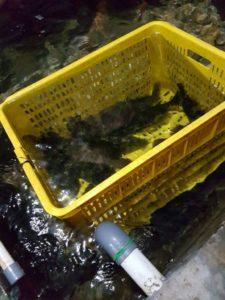 Supplier Ikan Hidup Denpasar